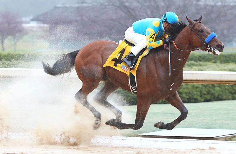 american_pharoah_rebel_800x525_resized3-16-2015-13-13-22-86_resized2015-3-30-16-26-61